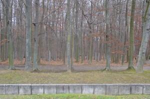 Le champ funéraire du camp spécial soviétique. C'est à la fin de 1989 que l'existence des fosses où avaient été ensevelies les victimes du camp soviétique est rendue publique. Les lieux de charniers sont signalés par des colonnes de métal.